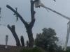 A+ Tree Service of Scottsbluff, NE